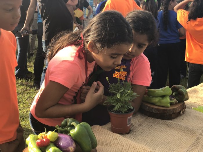 UNICEF USA partnered with Boys & Girls Club of Puerto Rico to launch a nutrition program that includes planting community gardens to supply fruit and vegetables.