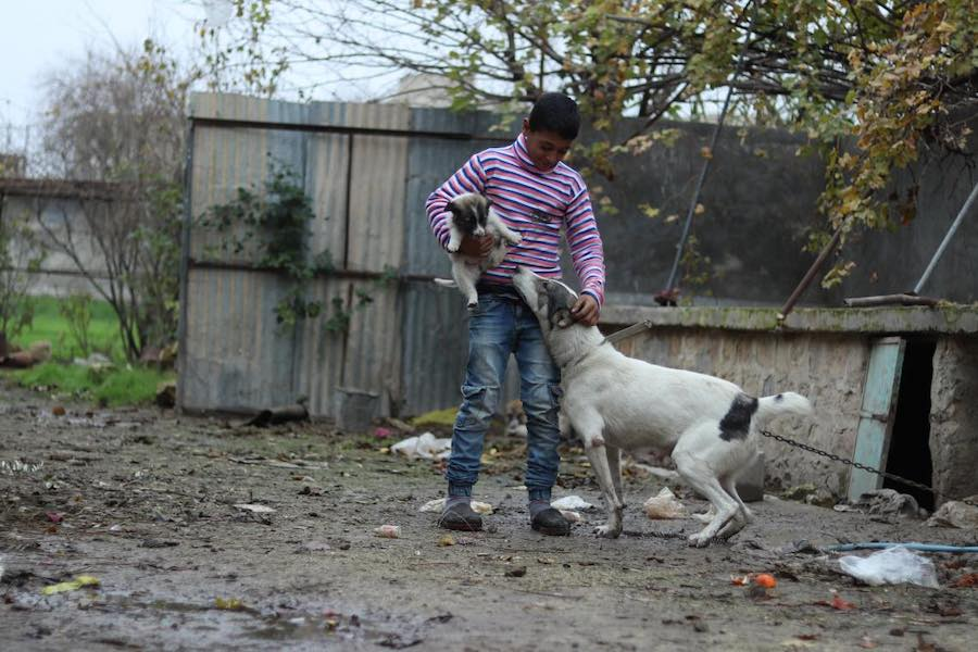 Mohammad, 13, plays with the family dog who is tasked with protecting them against strangers. Photo: UNICEF/ Syria 2018/ Khudr Al- Issa
