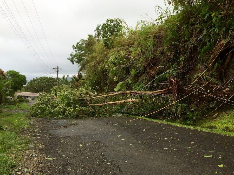 Downed trees are a common sight across Fiji in the aftermath of Cyclone Winston. UNICEF stands ready to assist in humanitarian response to help children and families.