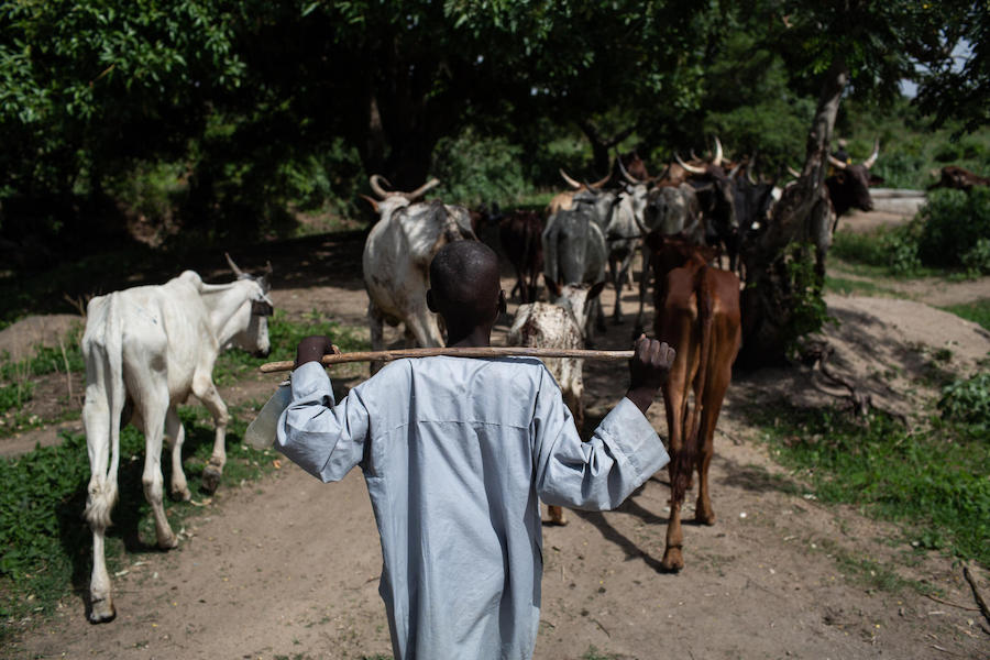 "Bouba, a survivor of a Boko Haram attack, herds cows for his foster family in the village of Baigaï, Cameroon and attends a UNICEF-supported ""radio school"" in his spare time."