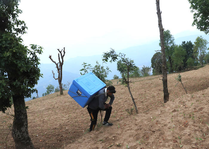 On April 21, 2021, Ram Dawadi, staff at the UNICEF-supported Bhachhek Health Post in Gorkha District in north-central Nepal, carries COVID-19 vaccines to the health facility to provide the second doses to health workers and frontline workers in the area.