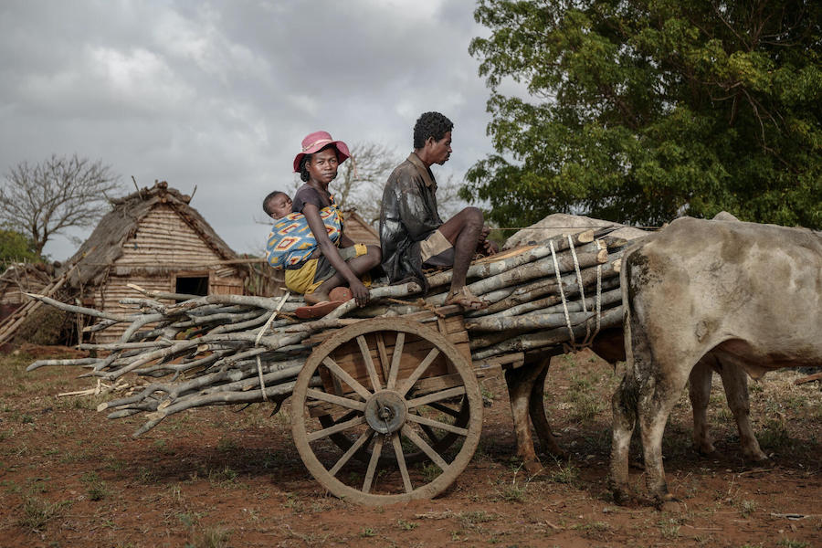 In drought-stricken, impoverished Androy region of Southern Madagascar, Vaha and her husband of Kobamirafo get by by renting a cart to bring firewood to the Ambovombe market to sell, splitting the proceeds with the cart's owner.