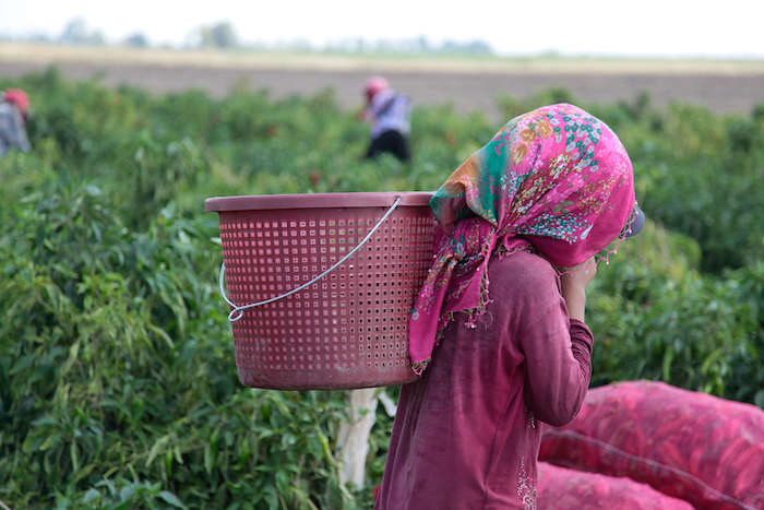 Amira works long hours as a seasonal agricultural worker in Turkey.