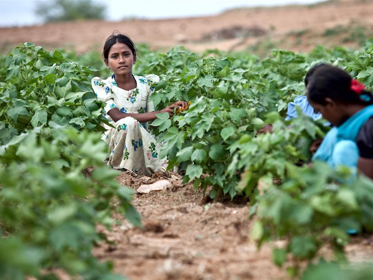 Reshmi, 12, worked in a cotton field in Karnatarka, India until a program implemented in conjunction with UNICEF helped her and other child laborers enroll in school.