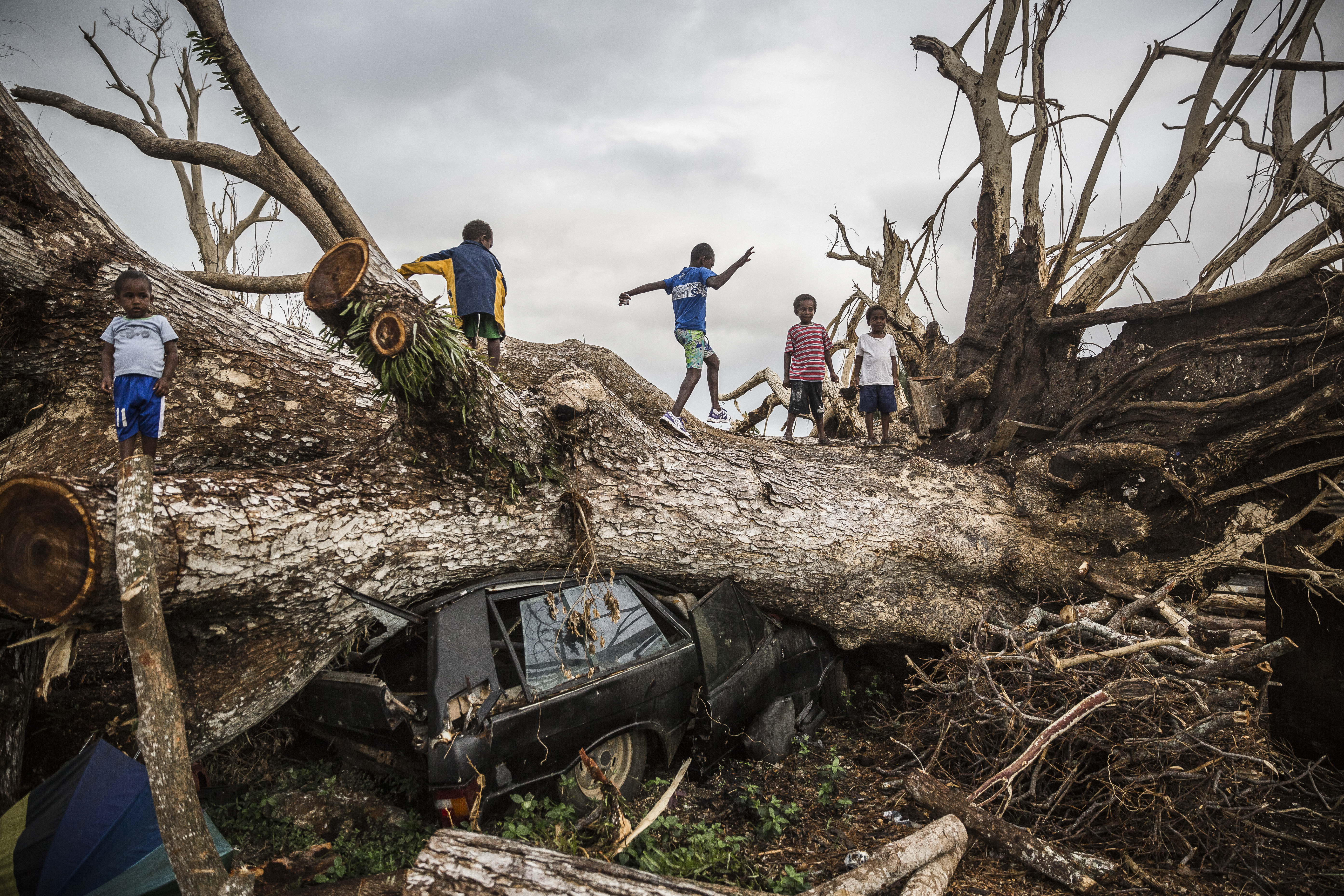 On 29 March 2015, children play on a fallen tree that came down during Cyclone Pam on 13 Marchs 2015 and has crushed a car on the outskirts of Port Vila in Vanuatu.