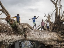 On March 29, 2015, children play on a fallen tree that came down during Cyclone Pam on March 13, 2015 crushing a car on the outskirts of Port Vila in Vanuatu.